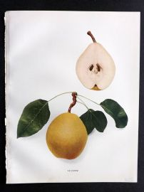 Hedrick - Pears of New York 1921 Fruit Print. Le Conte.